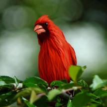 Mr. Cardinali