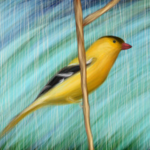 Gold Finch 2