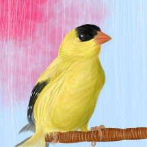 Gold Finch In Waiting 2