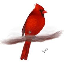 Cardinal in Smoke