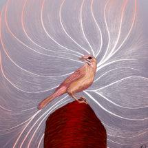 Lark Sparrow redo 2