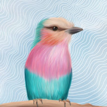 Lilac Breasted Roller2a